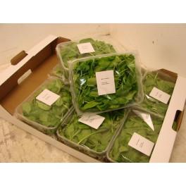 Baby spinazie 125 gram