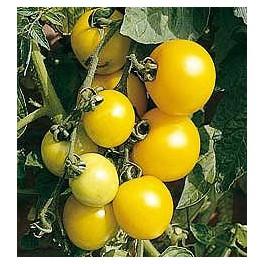 Cerise tomaat geel
