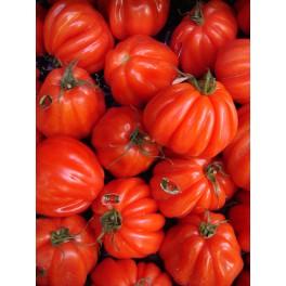 Coeur de beauf tomaat